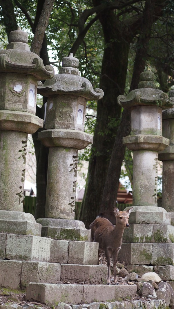 {Japan Winter} Nara (Part 2): Oh deer! Wandering around ...